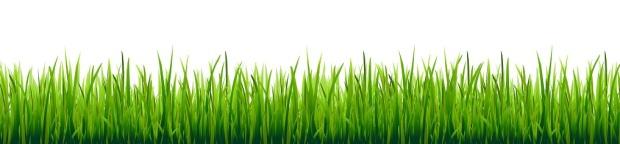 51631852 - big grass borders set, vector illustration